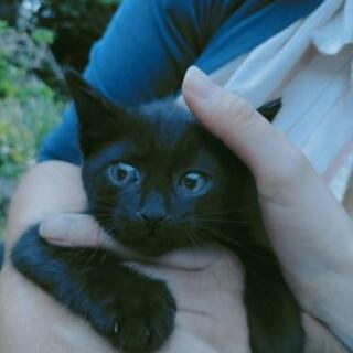 生後2ヶ月くらい?の黒猫ちゃんです