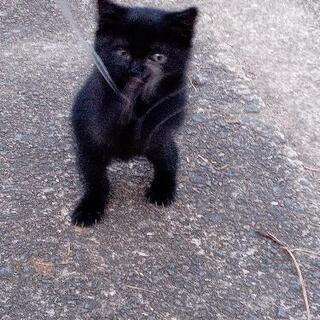 生後1ヶ月くらい?の黒猫
