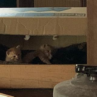 (募集終了)ノラの子猫が居着いた裏庭で5匹出産しました〜