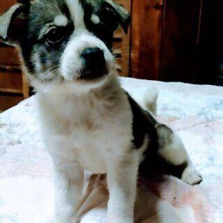 2ヶ月2匹の    子犬