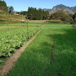健康農産美土里農園運営業務