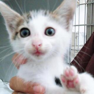 2ヶ月の可愛い子猫💓里親さんを探しています