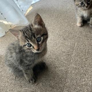 生後2ヶ月位の猫ちゃん男の子