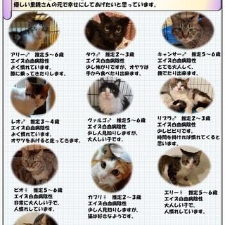 【代理募集】多頭崩壊レスキュー 10匹の猫たちの里親様募集中です。