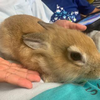 ウサギ2ヶ月