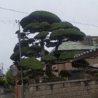 植木の剪定作業員急募‼️日払いで実力に応じて13000円から18...