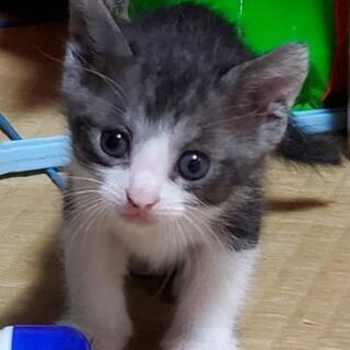 仔猫の里親募集終了致します。(里親様決まりました)