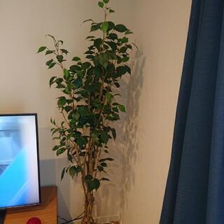 【ネット決済】フェイクグリーン  観葉植物