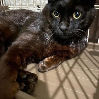 無人島に捨てられていた黒猫くん