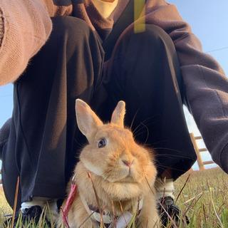 ウサギの里親さん募集中