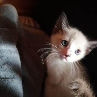生まれた時から人と育った人間大好き子猫達 よろしくお願いします。