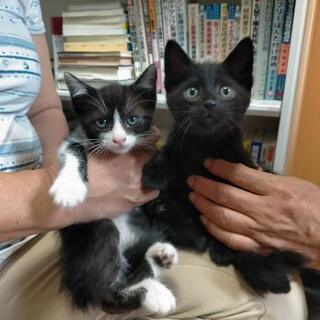 ぶちと黒猫のオスの兄弟です(⌒▽⌒)