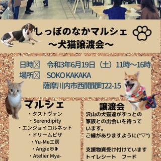 しっぽのなかマルシェ〜犬猫譲渡会〜