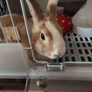 ミニウサギ 5カ月