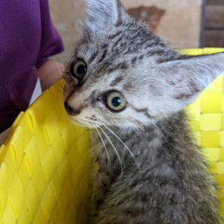 里親募集中! とっても可愛い子猫です!