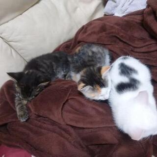 生後2ヶ月☆保護猫☆3兄弟