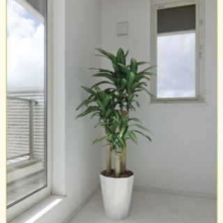 【ネット決済・配送可】観葉植物 光触媒 1.6m