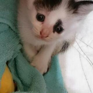 生後3週間ほどの仔猫。店の倉庫2日前に発見し、親猫は見当たりませ...