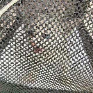 野良猫 子猫 白 3匹(お問い合わせ多数のため一旦締めます) ♪...