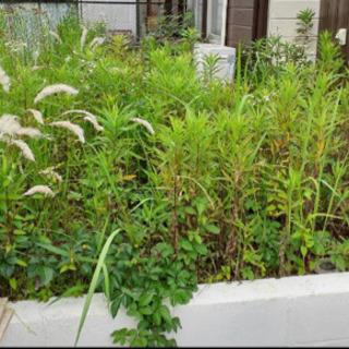 茨城いやどうもっ! 便利屋 草刈り 除草剤散布作業