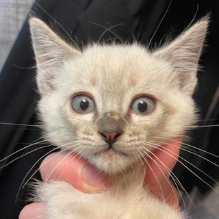 野良猫の赤ちゃんです。この子は、里親様決まりました。