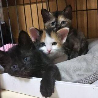 可愛い3姉妹ずっとの家族募集中