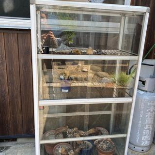 観葉植物 ガラスケースの画像