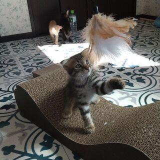 助けてください! - 猫