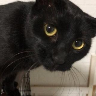 甘えん坊でおしゃべり?な黒猫です。