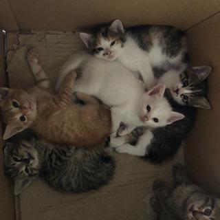 子猫6匹産まれました。3匹貰われています。
