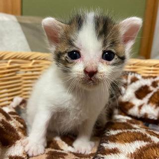 生後1ヶ月 子猫 (仮名:ちむ)