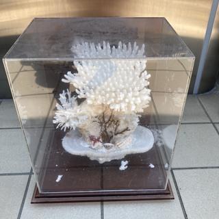 白珊瑚の置物【中古】
