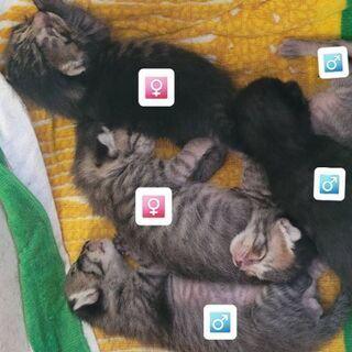 6月1日生まれ🐈️ メス2匹☆オス3匹