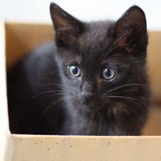 【募集一時停止】元気で食いしん坊・黒猫子猫 湯沢くん