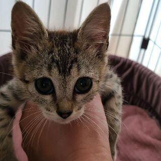 保護猫を迎えよう!No.143ちゃん!♀️
