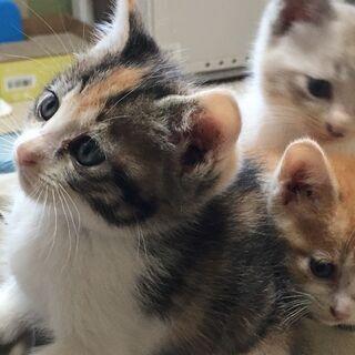 【受付停止中】保護した元気いっぱいの子猫2匹(生後約1ヶ月弱)