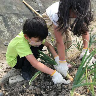 こども食堂農園 管理・農業ボランティア募集(奈良県大和郡山市) − 奈良県