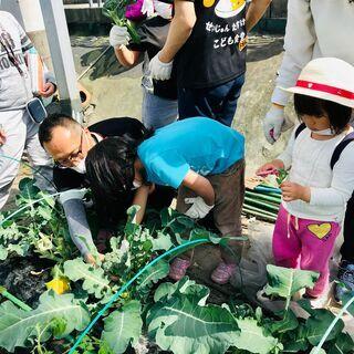 こども食堂農園 管理・農業ボランティア募集(奈良県大和郡山市) - 助け合い