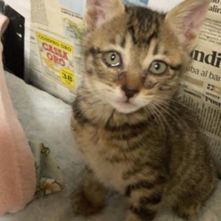 生後一ヶ月位の子猫1匹います