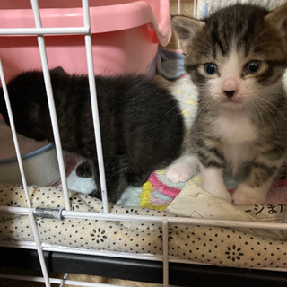 (追記6/12)里親募集・野良猫ちゃんが子猫を産みました