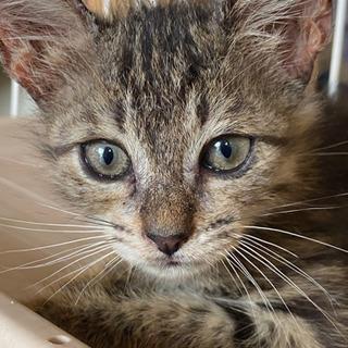 2ヶ月の子猫(募集停止中)
