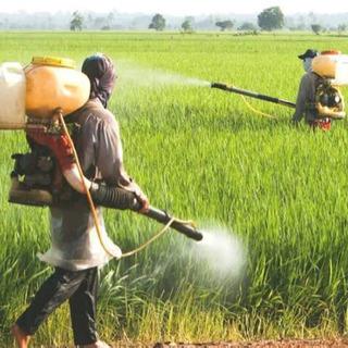 𐤔𐤔𐤔🍆農薬散布の手元作業🥕𐤔𐤔𐤔