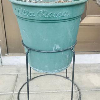 植木鉢&台座 差し上げます。