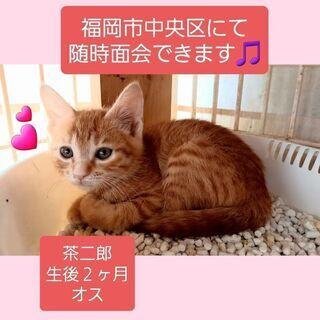 福岡市中央区にて随時面会できます🎵茶二郎