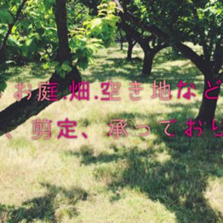 名古屋市周辺 草刈り致します♪ お庭も畑も空き地も綺麗にさっぱり♪