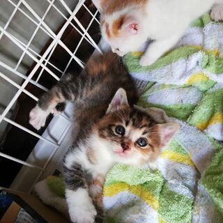 子猫3匹里親募集中
