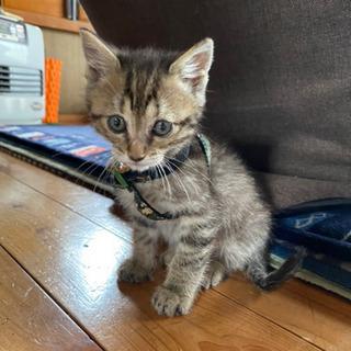 捨て猫保護しました(生後2ヶ月)