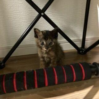 保護した仔猫ちゃんの里親募集