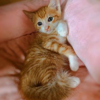 おっとりした子猫