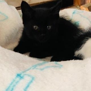 黒の子猫♡1ヶ月半